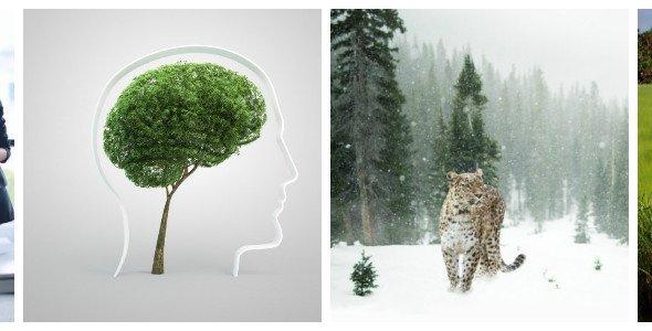 Программы для экологов и